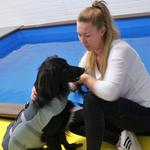 COULD HYDROTHERAPY HELP YOUR DOG?