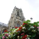 RHS BRITAIN IN BLOOM FINALIST - BEVERLEY - NEEDS YOUR HELP TO WIN BEST LARGE TOWN