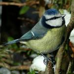 Find out more about the birds of the Humber Bridge Country Park and Hessle at a free event