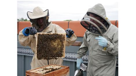 Bee colony brings biodiversity buzz to Flemingate