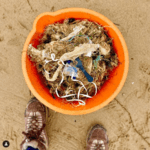 Join Yorkshire Wildlife Trust on a Beach Clean!