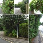 Residents urged to cut back hedges and trees to avoid causing obstructions