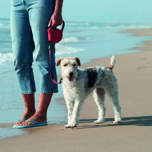 Beach dog restrictions to begin for summer season